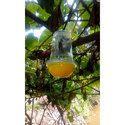 Fly Catcher Bottle