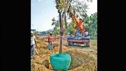 Tree Transplantation
