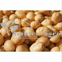 Potato Tuber, Packaging: Plastic Bag or Polythen