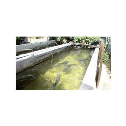 Aquaculture Fish Farming Service