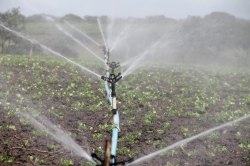 Automatic Irrigation Service