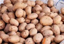 Red A Grade Potato