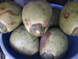 Green Coconet