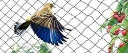 Bird Protection Mesh Net
