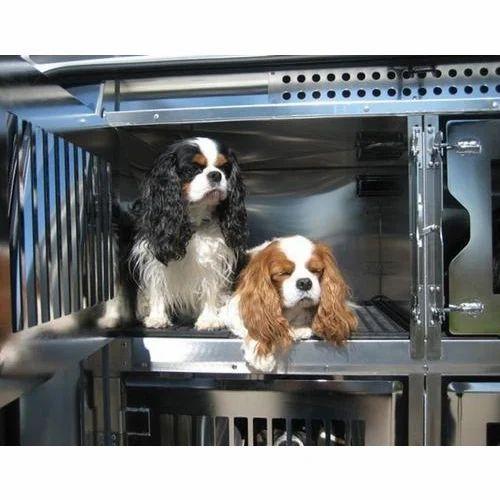 Pet Transportation Service, Pet travel consultancy, पेट