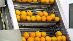 Fruits Belt Conveyors