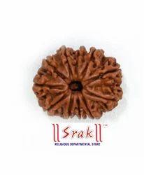 11 Mukhi Rudraksh Beads