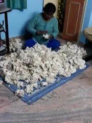 Elm Oyster Mushroom, Packaging: PUNNET BOX