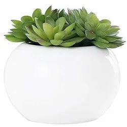 Modern Oval Planter