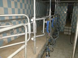 8 Point Swing Over Milking Parlor