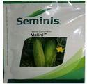 Seminis Cucumber Seed Malini, Pack Size: 50 Gm