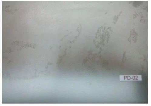 Wholesaler Of Wall Decorative Film Wall Glass Film By Raj Film