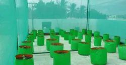 Grow Bags For Terrace Garden
