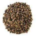 Organic Moringa Seed