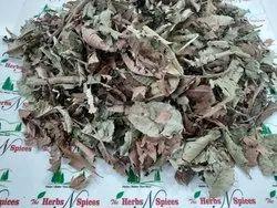Guava Leaves - Amrud - Psidium Guajava
