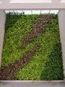 Vertical Garden with Pot