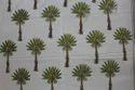 Designer Palm Tree Block Print Cotton Fabric
