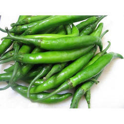 A Grade Green Chili, Guntur, Byadagi and Hybrid, Pack Size: 25 Kilogram