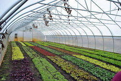Horticulture Farm Development Service