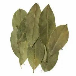 Dark Green Good Bay Leaves, Packaging Type: Plastic Bag & Jute Bag
