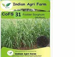 CoFS31 Fodder Sorghum /Jowar Seeds (Multicut/Perennial)