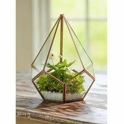 Rose Gold Terrarium Plants, For Decoration, Size: Medium