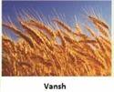 Mangal Dev Hybrid Vegetable Seed Vansh