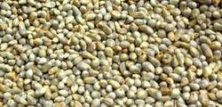 Pearl Millet Grain