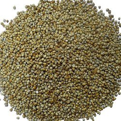 Non brand Fresh Cattle Feed Bajra, High in Protein, Packaging Type: PP Bags