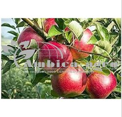 Apple Plants