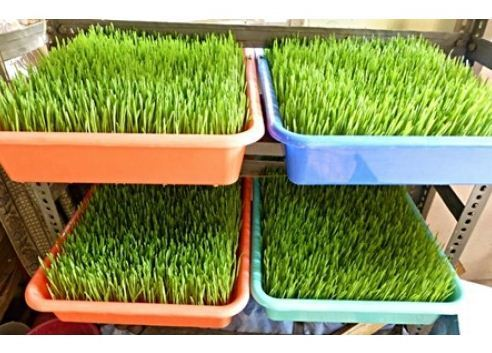 Growing Kit Trays / Gardening Tray Tray Set Of 4, Packaging Type: Polythene  Bag