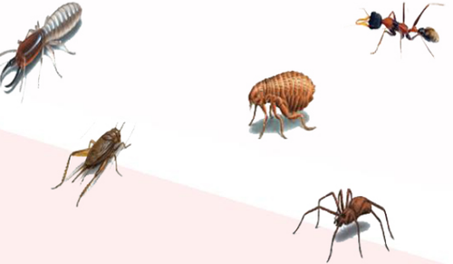 Bed Bug Control Services Bed Bugs Control In Dhayari Pune Katkar