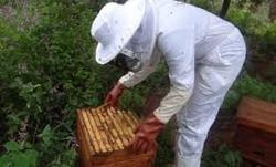 Beekeping Project