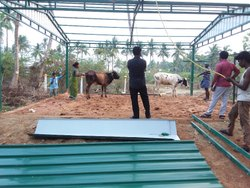 dairy form shed - Cow Dairy Farm Shed Service Provider from Chennai