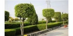 Landscaping and Horticulture Design