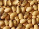 Potato K Chandramukhi Seeds