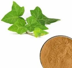 Ivy Leaf extract, Packaging Type: Drum, Packaging Size: 25 Kgs