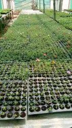Pro Seed Tray