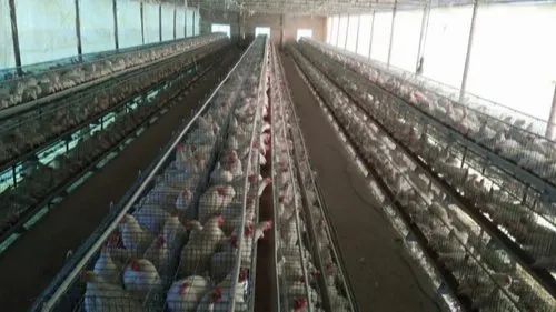 Poultry Cages - Poultry Layer Cages Manufacturer from Mohali