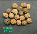 Natural 9 Mukhi Nepali Rudraksh Bead Original