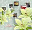 Rangoli Glue Digital Wallpaper