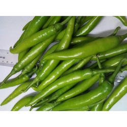 PEC Fresh Green Chilli, Andhra Pradesh, Packaging Size: 20 Kg
