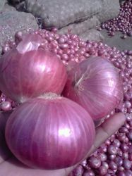 Export Quality Onions Fresh Onion