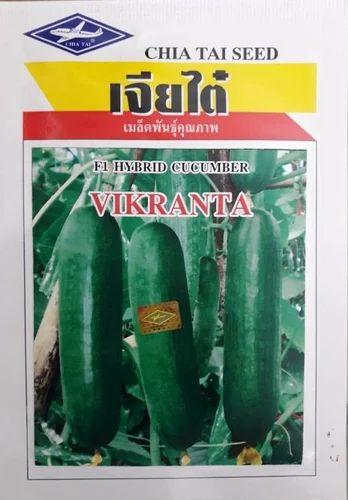 4x 2400 Seeds HOLY BASIL CHIA TAI Quality Seed Home Garden Plant Thai Vegetable