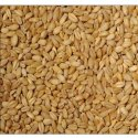 Wheat Seeds, For Food Processing