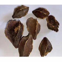 Terminalia Arjuna Seeds