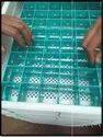 10,000 Egg Hatcher