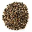 Moringa Black wingless seeds