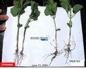 MaxEEma Bio Stimulants Seed Treatment Conc
