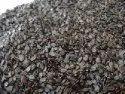 Ban Tulsa Seeds - Basil Seeds - Ban Tulsi Seeds